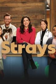 Strays-full